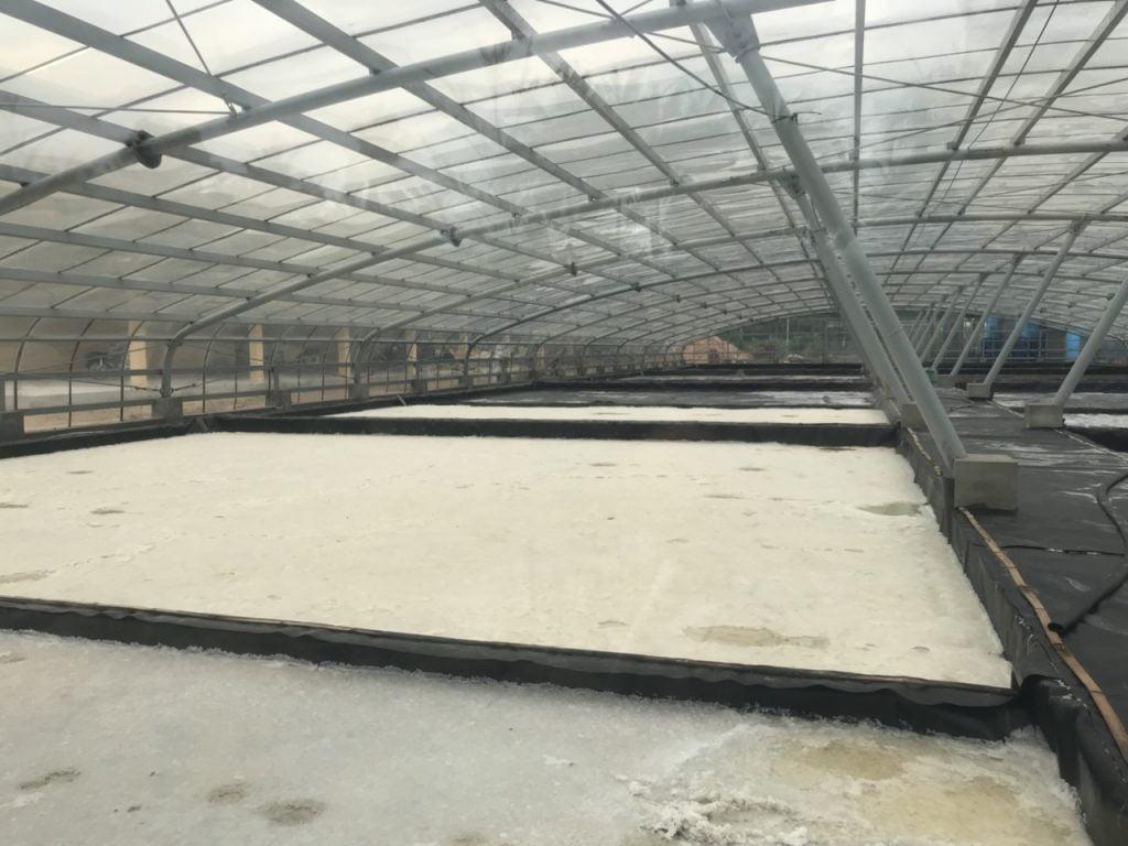 Công nghệ sản xuất muối trong nhà kín