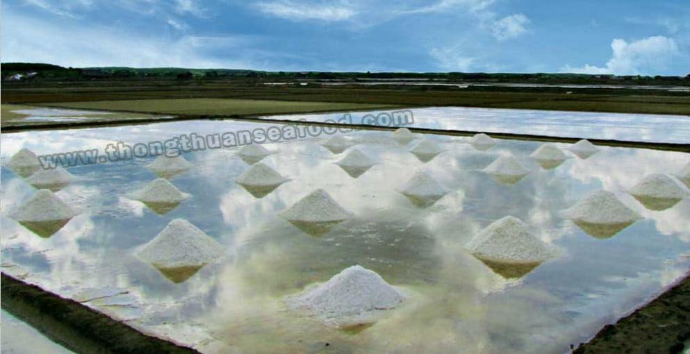 Đồng muối của Thông Thuận